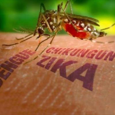 Роспотребнадзор начал борьбу с опасными комарами