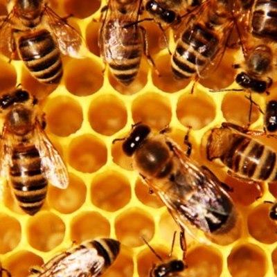 В Орловской области возбудили первое в России уголовное дело о гибели пчёл