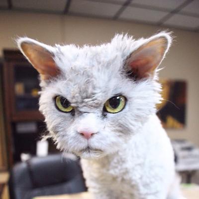 В Норвегии кот пережил сорок минут в стиральной машине