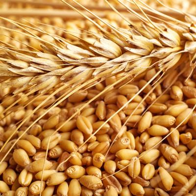 Минсельхоз ожидает рост сельскохозяйственного производства в России в 2019 году на уровне 1-1,5%