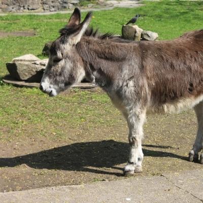 Власти испанского курорта Михас встали на защиту осликов
