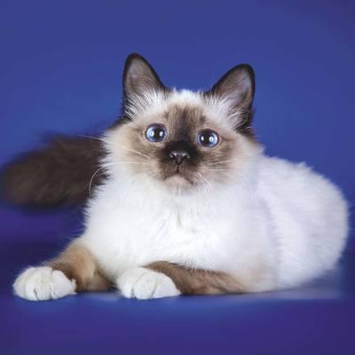 Штат Нью-Йорк запретил кошачий