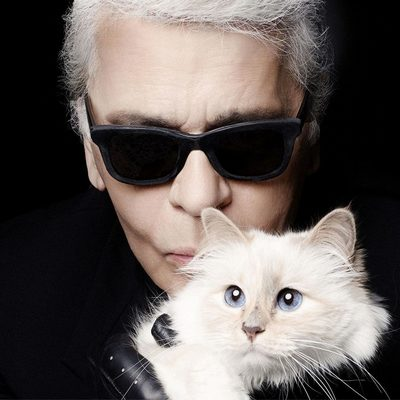Кошка Лагерфельда может унаследовать часть состояния хозяина