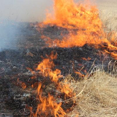 Путин поручил главе МЧС увеличить группировку для тушения пожаров в Забайкалье