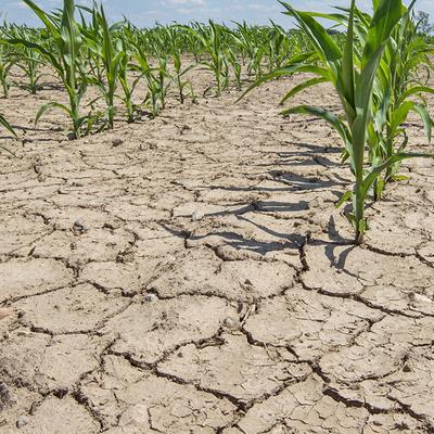 В 55 департаментах Франции ввели ограничения на использование воды из-за засухи