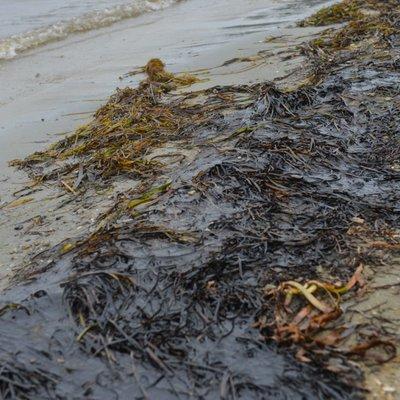 На Балтийской косе обнаружены следы разлива нефтепродуктов
