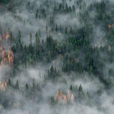 Дымом от лесных пожаров заволокло Якутск