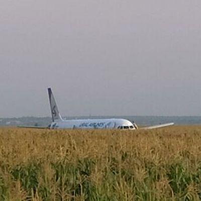 В Подмосковье демонтируют самолет, который сел на кукурузном поле