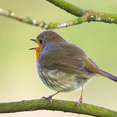 Американские ученые зафиксировали начало массового вымирания птиц