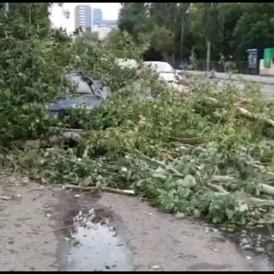 Сильный ветер повалил более 30 деревьев в Самаре
