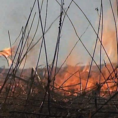 В Самарской области горят 13 дачных домов и сухая трава