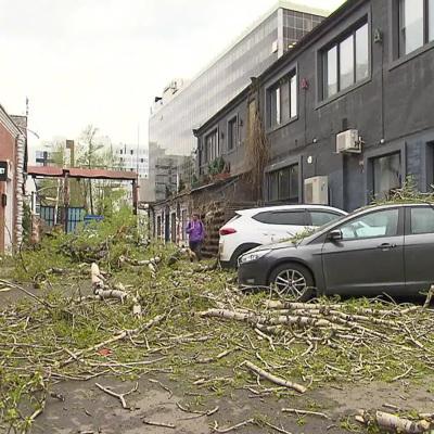 Вырванное ветром дерево насмерть придавило пенсионерку в Подмосковье