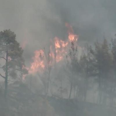 Террористы взяли на себя ответственность за лесные пожары в Турции