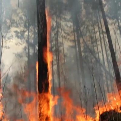 Площадь лесного пожара у якутского села Кылайы увеличилась за сутки до 2,5 тыс га