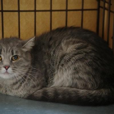 В ГД внесут законопроект о штрафах за неправильное содержание домашних животных