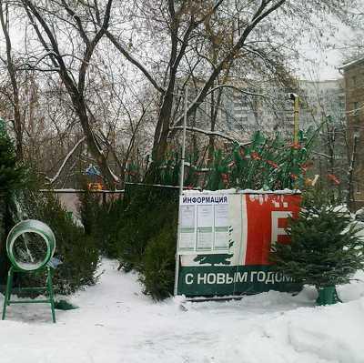 Первые ёлочные базары открылись в Подмосковье