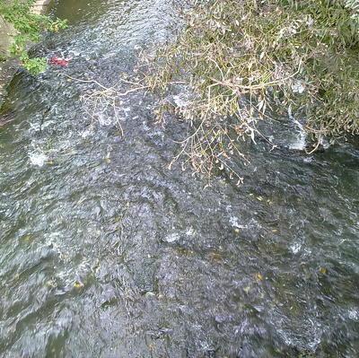 В Приморье реки вернулись в берега после паводка