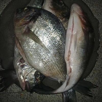 Московские водоемы не предназначены для ловли рыбы, пригодной в пищу