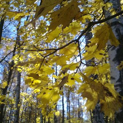 Золотая осень в Москве продержится до следующей недели