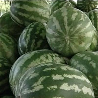 Засушливая погода в ряде регионовв этом году не скажется на урожае бахчевых