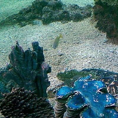 В Приморском океанариуме погибла белуха