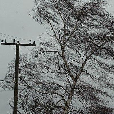 Порывы ветра, переходящие в ураган, второй день не прекращаются в Грузии