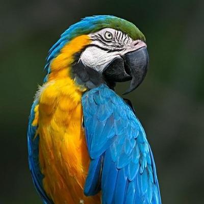 Соседи подали в суд на британскую пенсионерку из-за поющего оперные арии попугая