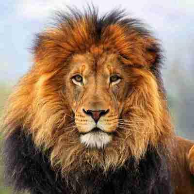 Владелец парка львов