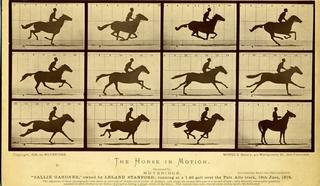 Лошадь в движении. Салли Гарднер» 1878 год
