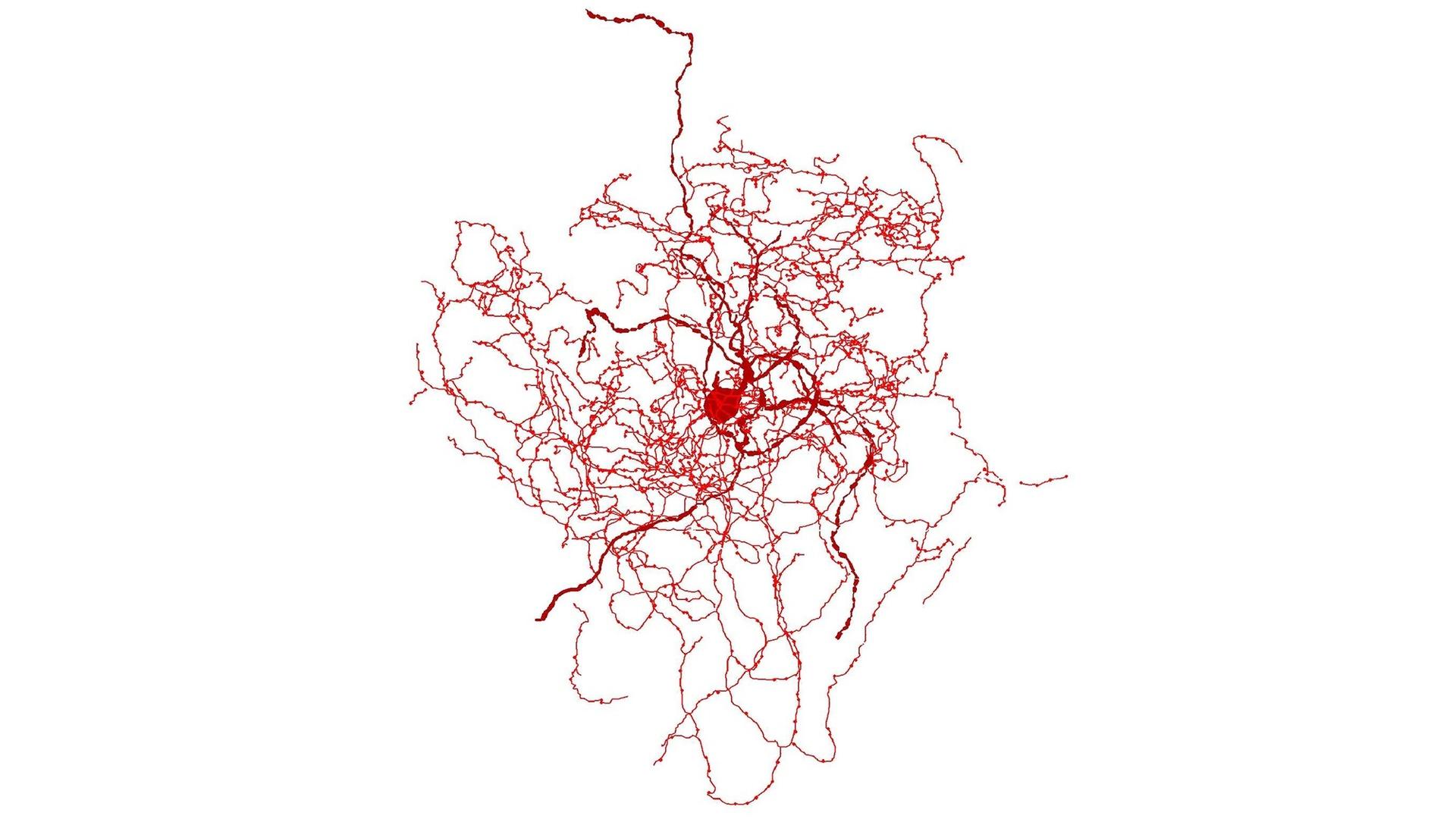 Найден уникальный для человека нейрон