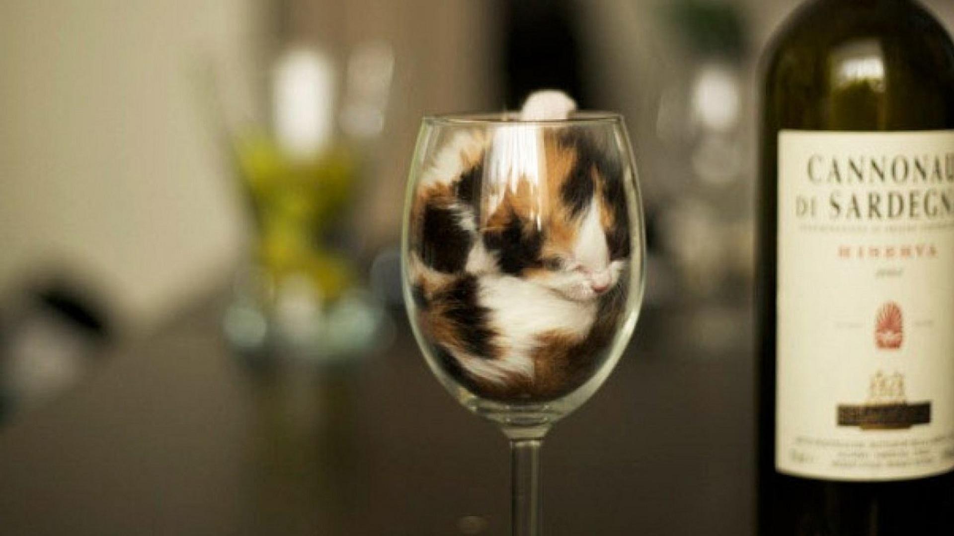 Картинки по запросу жидкие кошки
