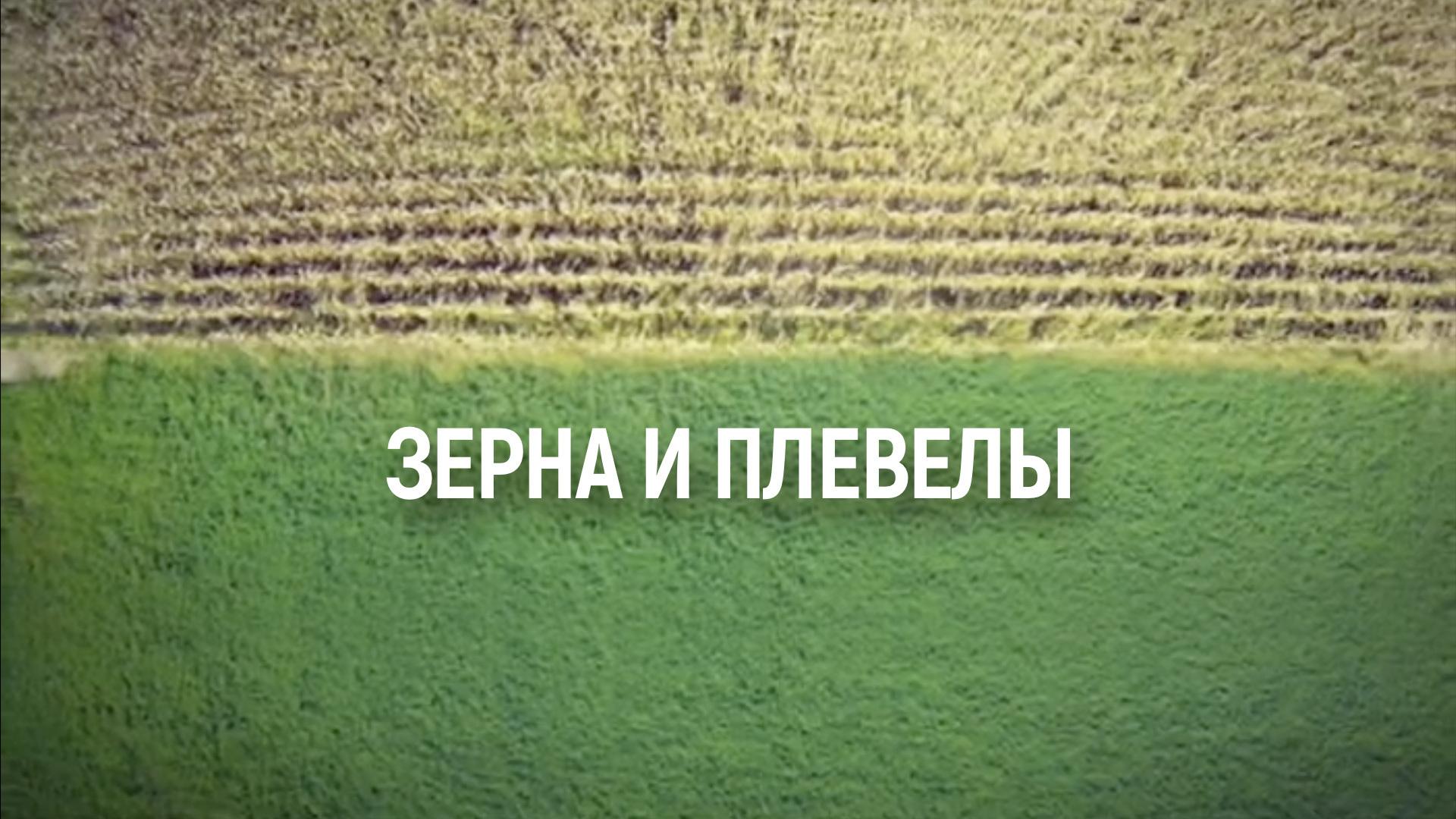 Зерна и плевелы