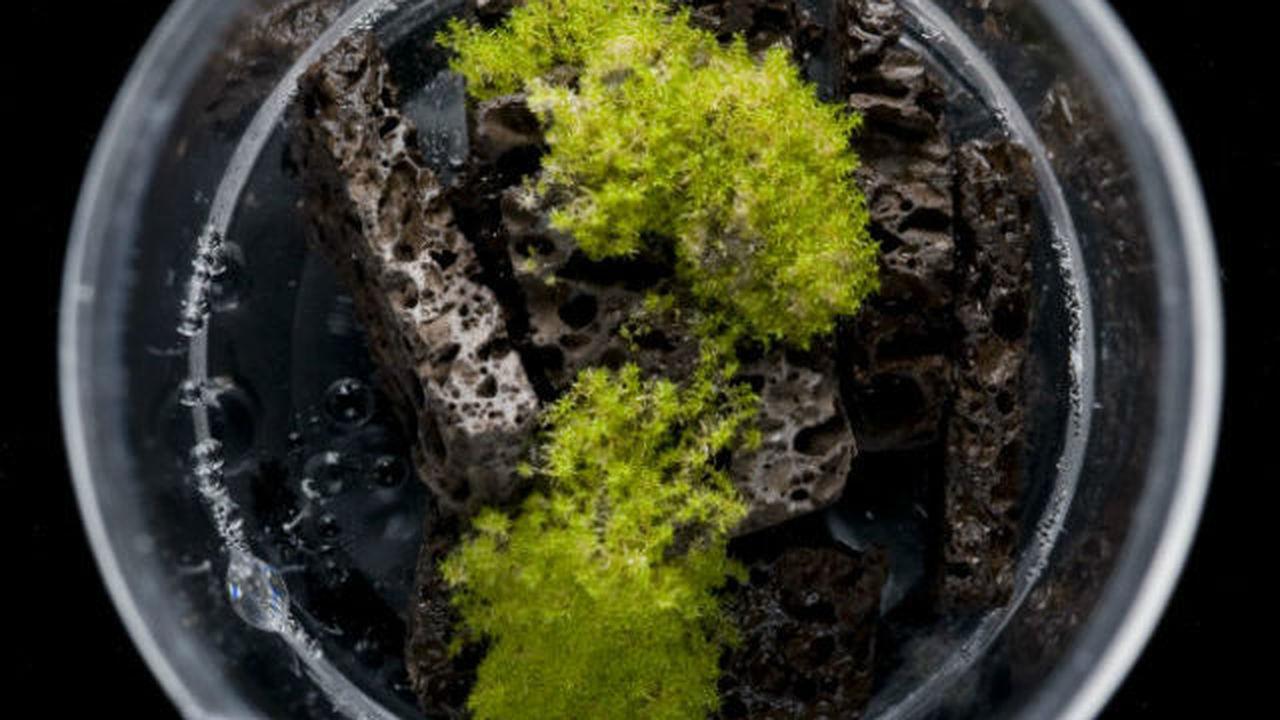 Древние растения обвинили в наступлении ледникового периода