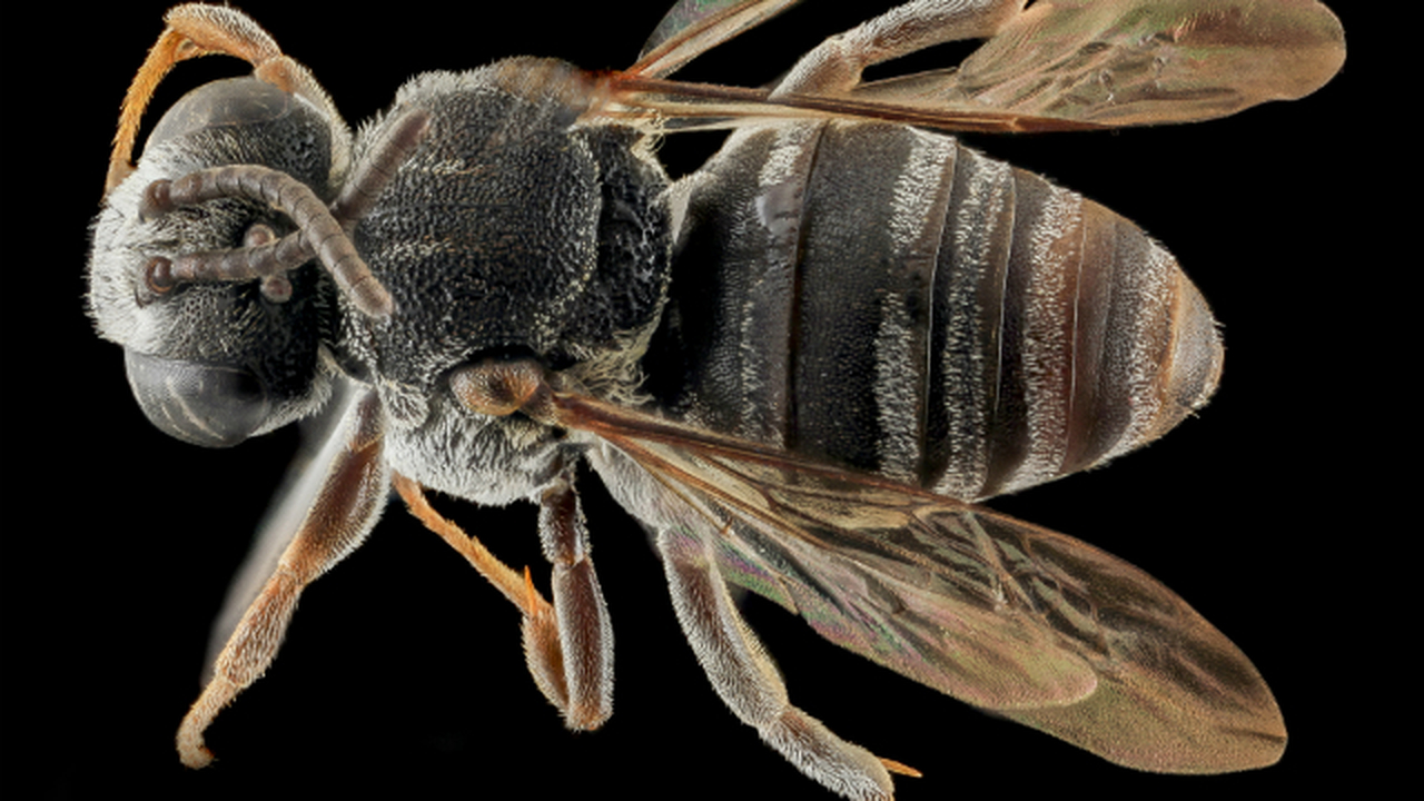 Пчёлы чуть не вымерли вместе с динозаврами