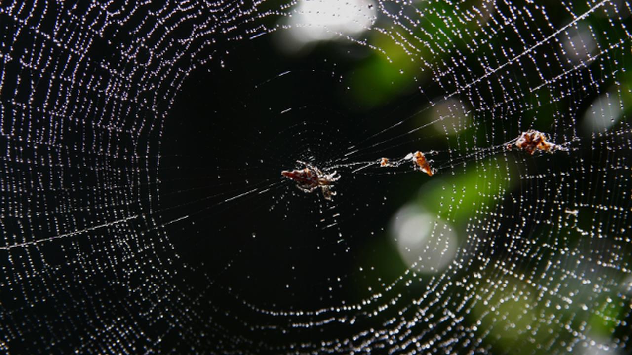 Учёные предложили использовать паутину для очистки воздуха