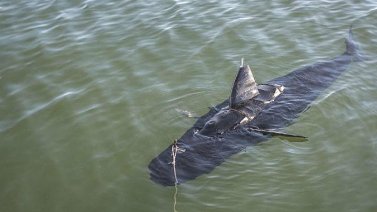 ВМС США запустит в океан роботов-акул