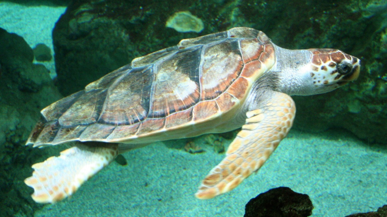 Морские черепахи создают кладки, ориентируясь по магнитному полю Земли