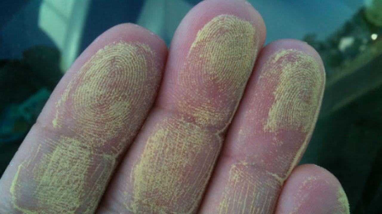 Выпускники МГУ представили приложение для сезонных аллергиков