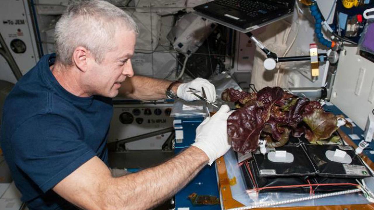 """Эксперты рассказали, смогут ли последователи """"Марсианина"""" выращивать картошку на Красной планете"""
