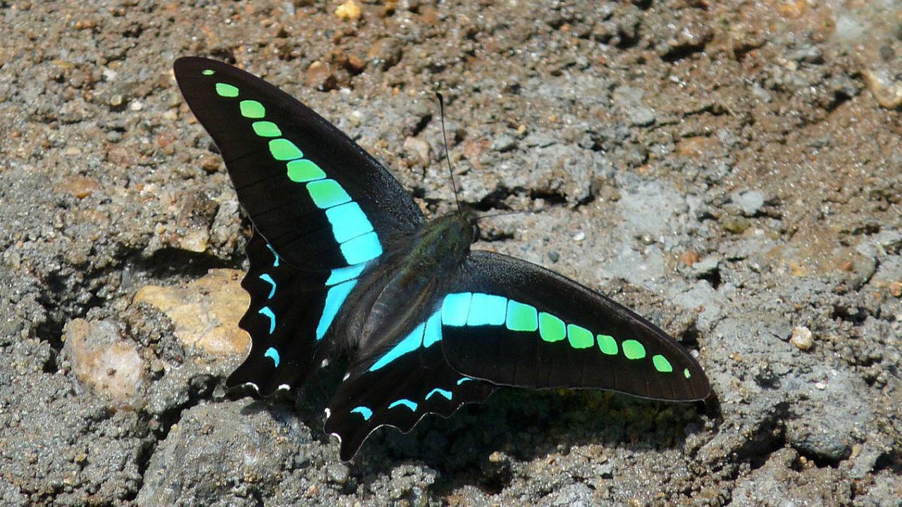 Бабочки могут воспринимать невероятное количество цветов