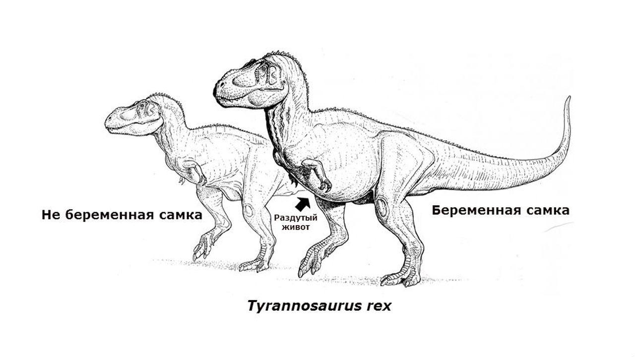 Палеонтологи узнали о беременности тираннозавра по составу кости