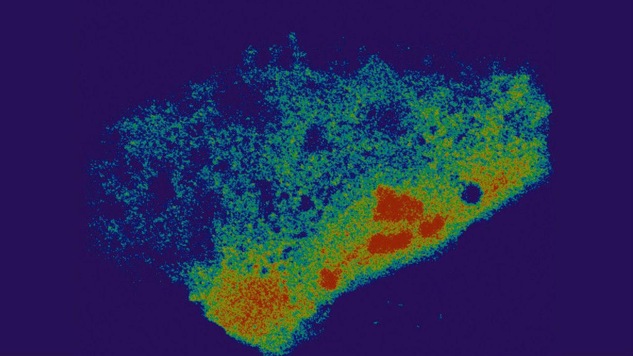 Молекулярные ножницы впервые натравили на РНК