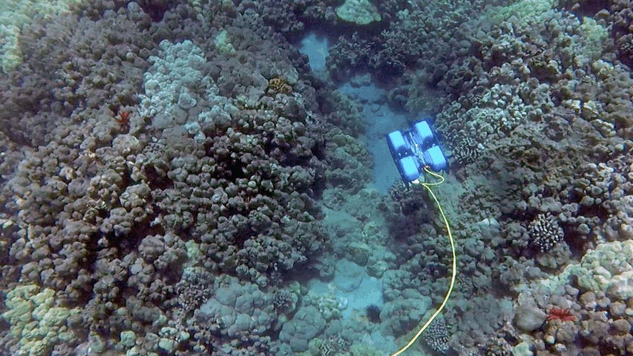 Первый доступный подводный дрон поможет почувствовать себя Кусто