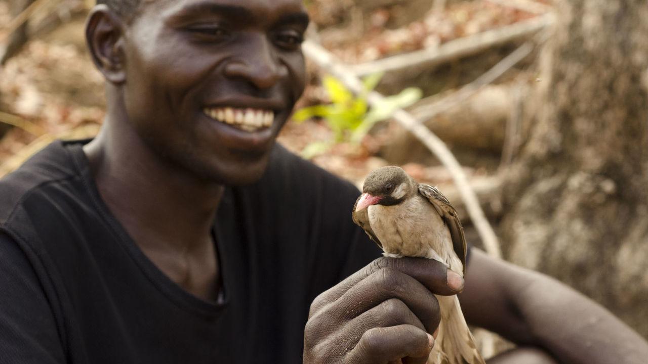 Любовь к меду: африканские охотники и птицы объединились в поисках ульев