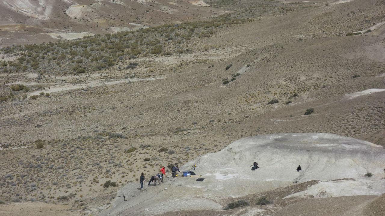Южное полушарие Земли быстрее оправилось от падения астероида, погубившего динозавров