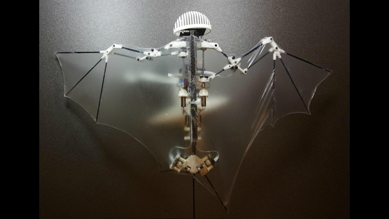 Сложнее, выше, быстрее: роботизированная летучая мышь расправляет крылья