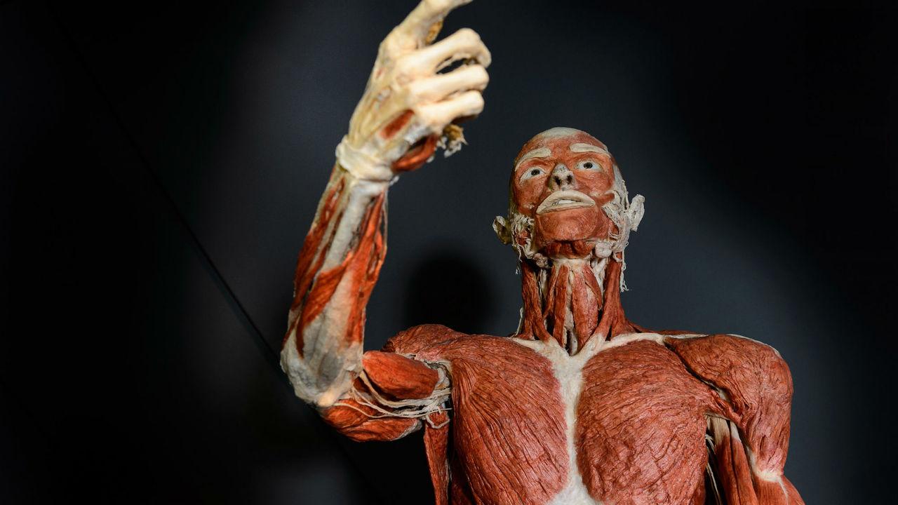 """Роботы-гуманоиды будут """"разнашивать"""" человеческие ткани перед трансплантацией"""