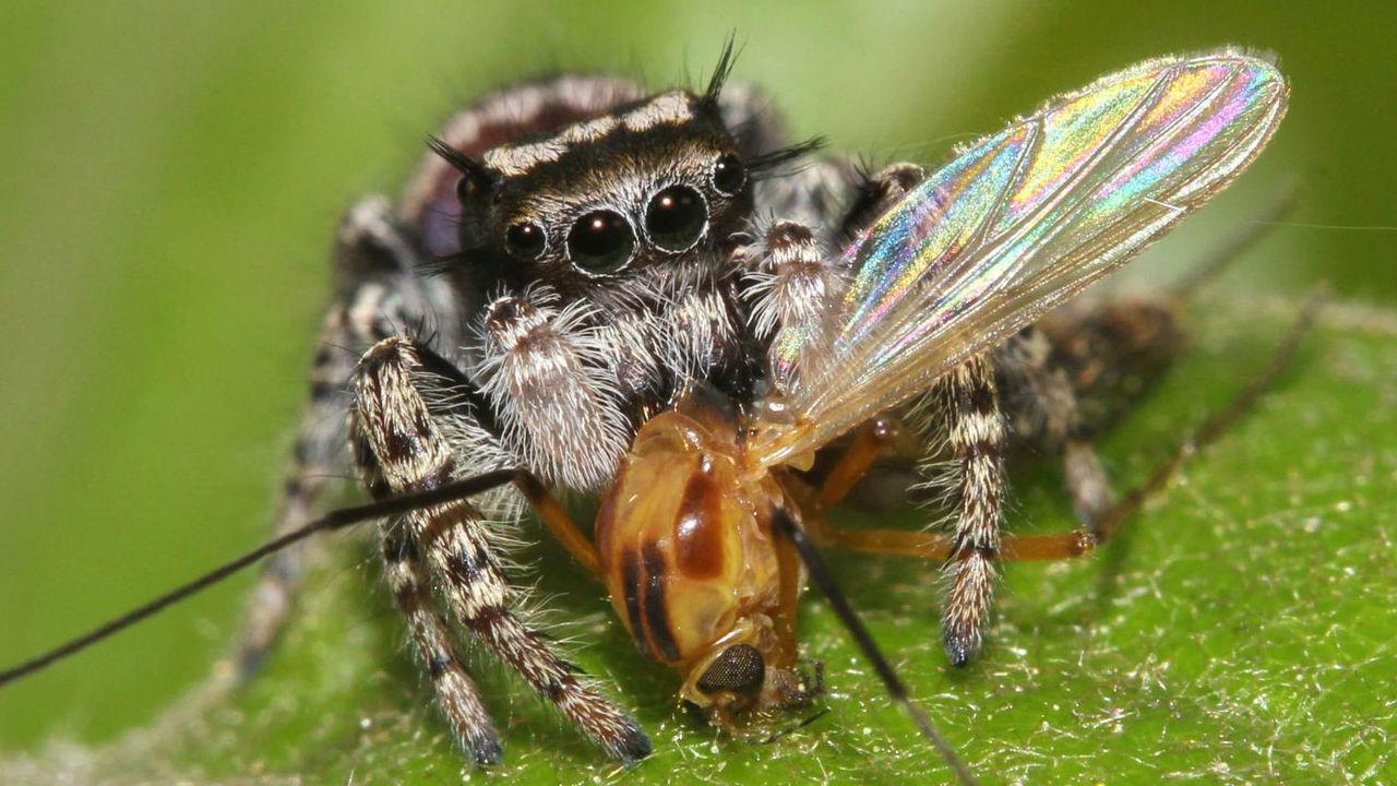 Пауки ежегодно съедают добычи в два раза больше массы всех взрослых людей Земли