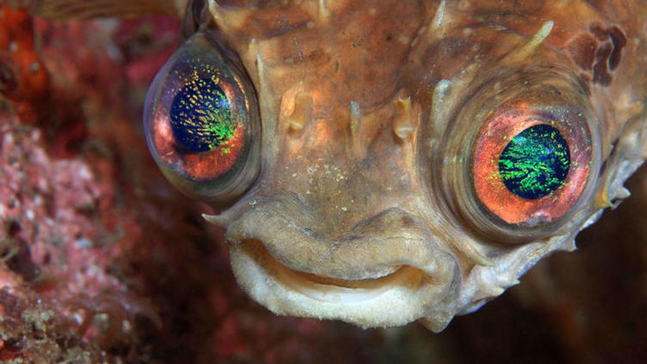 """Безжалостный квартирант: паразит живёт внутри рыбы и охраняет её, пока не подвернётся """"дом"""" получше"""