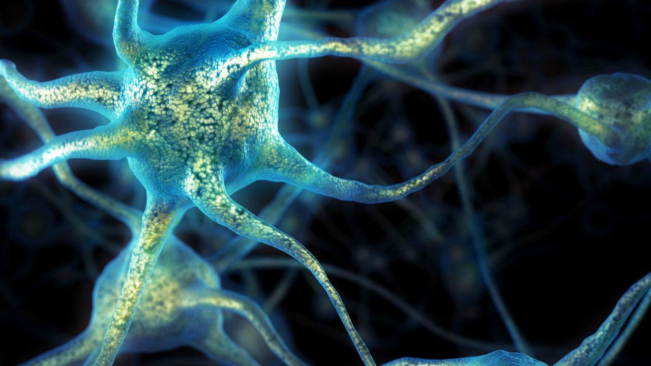 Без вариантов: центральная нервная система возникала в процессе эволюции несколько раз